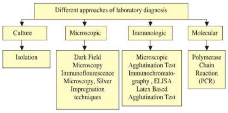 Leptospirosis Approaches to Lab diagnosis.png